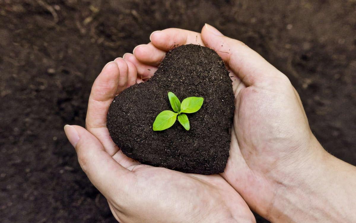 Грунты Biolan: европейское качество для белорусских садоводов