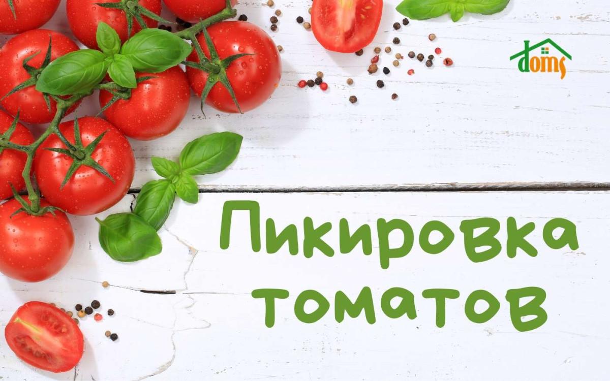 Как правильно пикировать помидоры