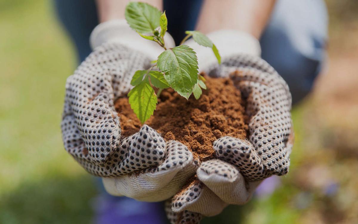 Как выбрать перчатки для сада и огорода