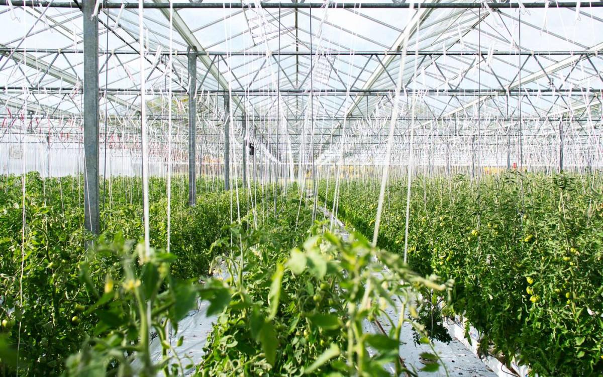 Огород без хлопот: автономное проветривание теплицы