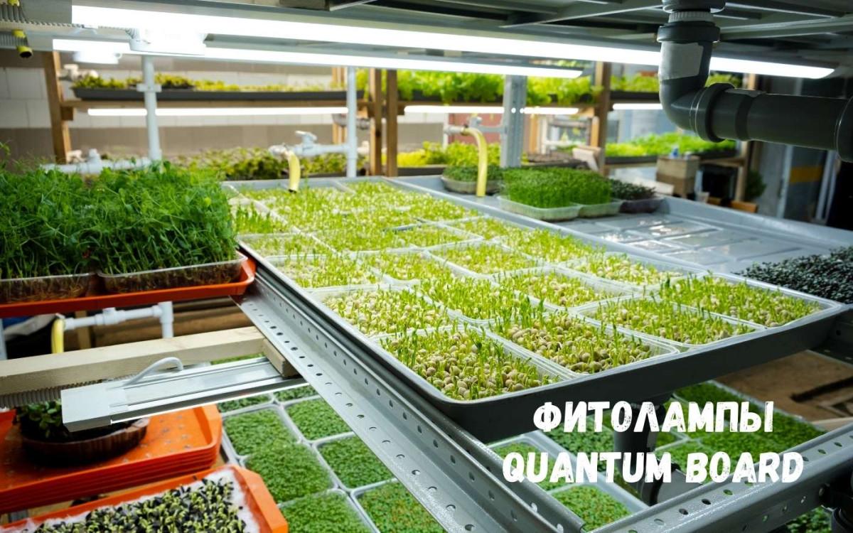 Quantum board – фитолампы нового поколения: особенности, достоинства, правила выбора и установки