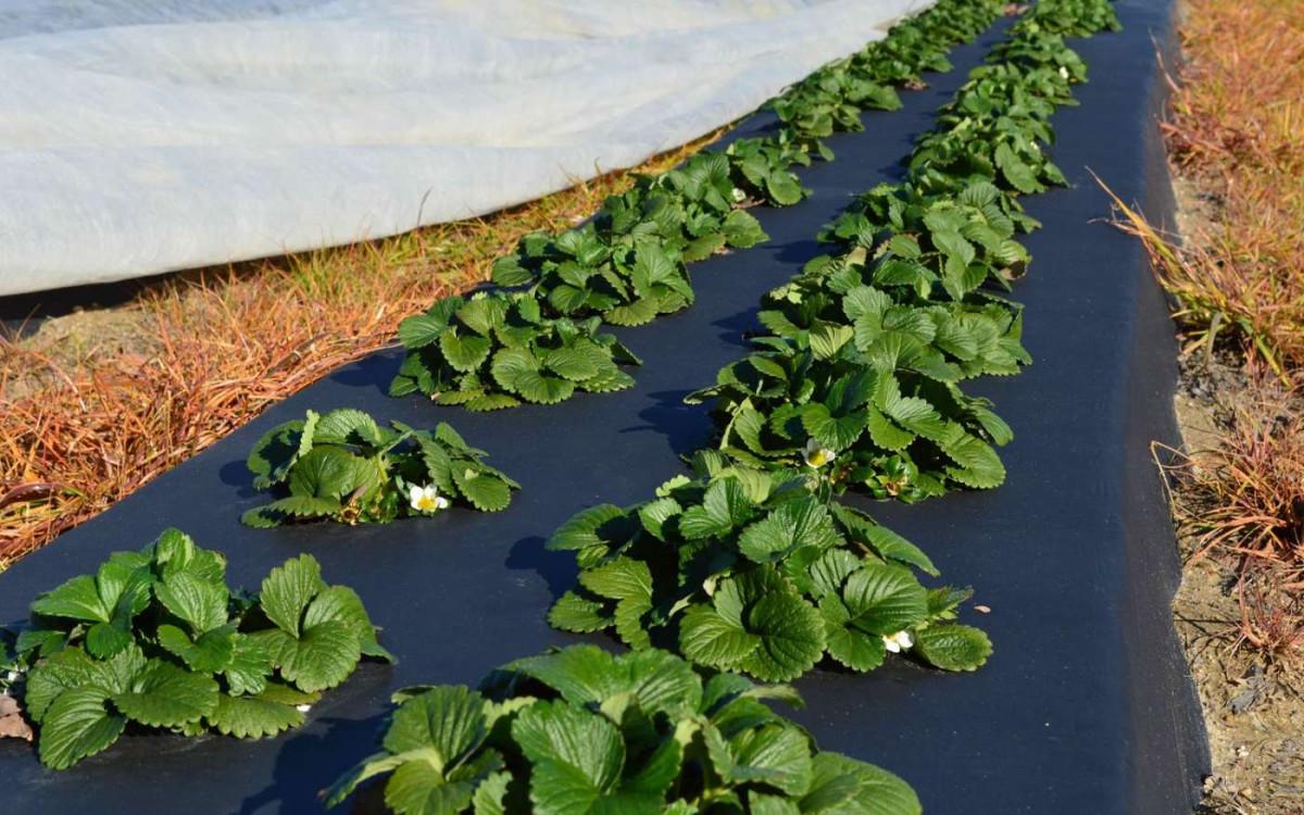Спанбонд для огорода: какой выбрать и как использовать