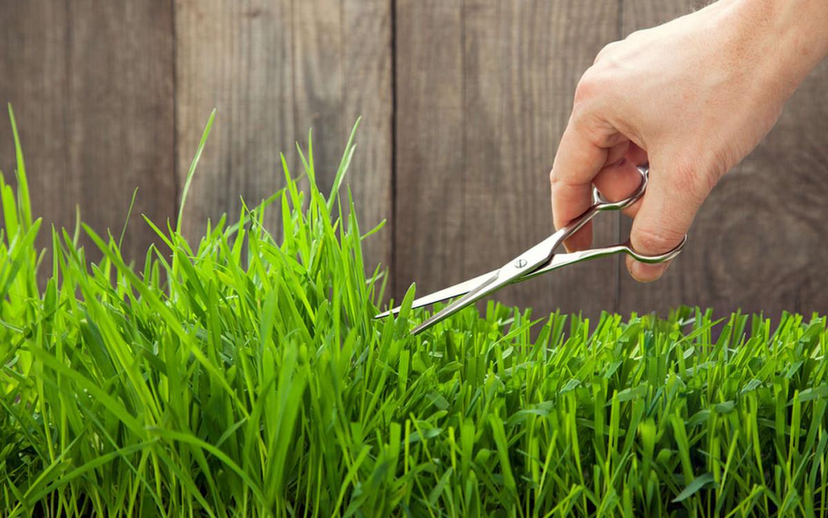 Выбираем садовые ножницы для живой изгороди, травы и роз