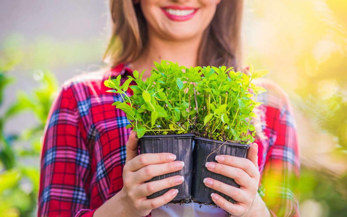 Выбор удобрений для крепкой рассады