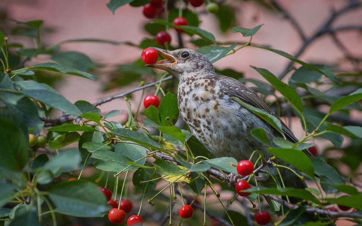 Защитим урожай от птиц - простое и экологичное решение