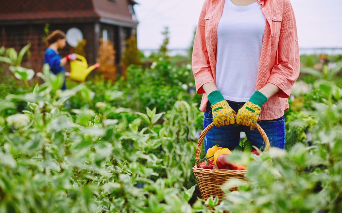 Аминокислоты для подкормки урожая