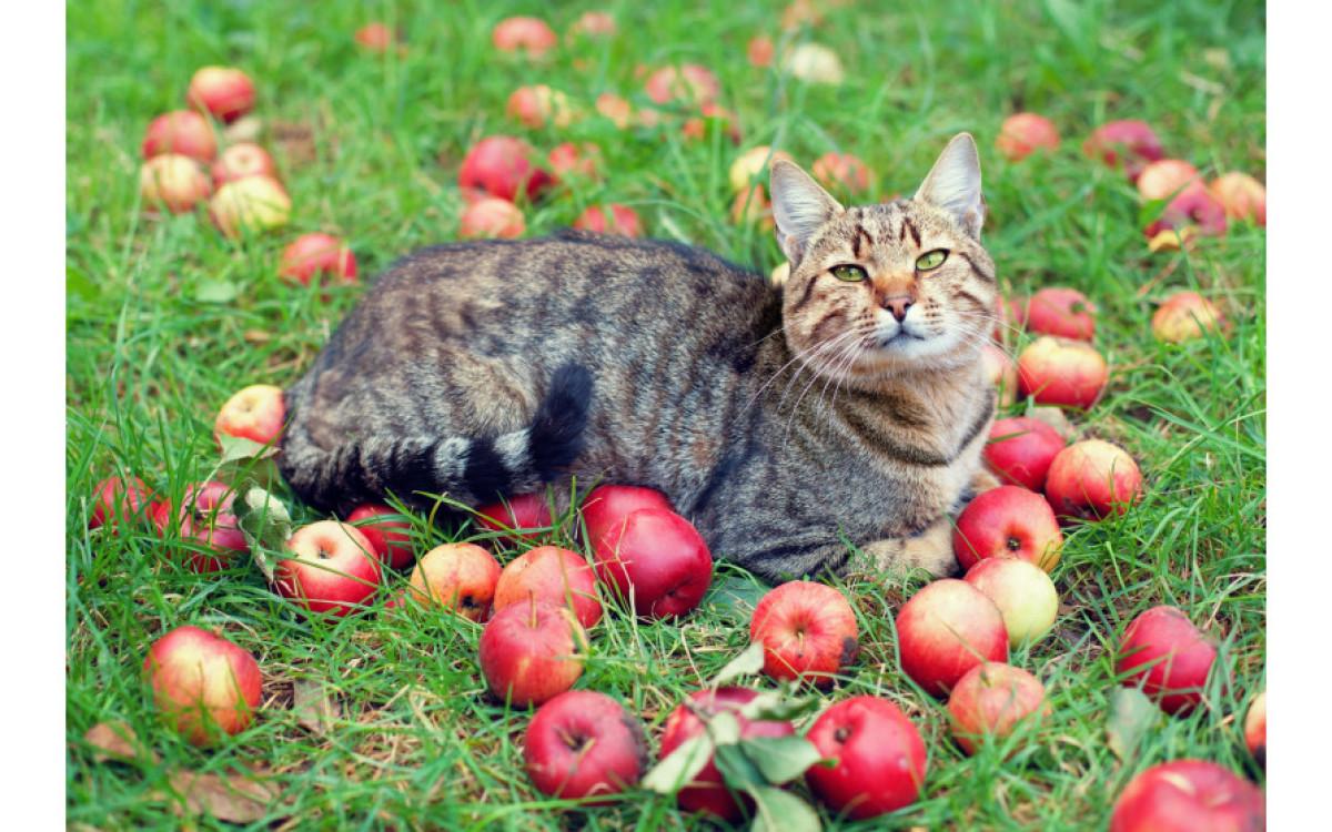 Что делать с опавшими яблоками в саду?