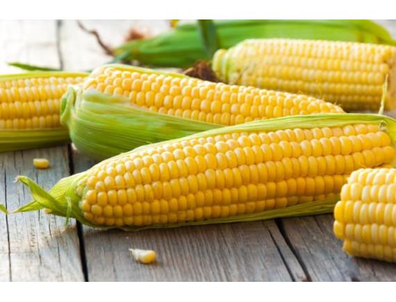 Кукуруза сахарная Бостон F1 (20 шт)