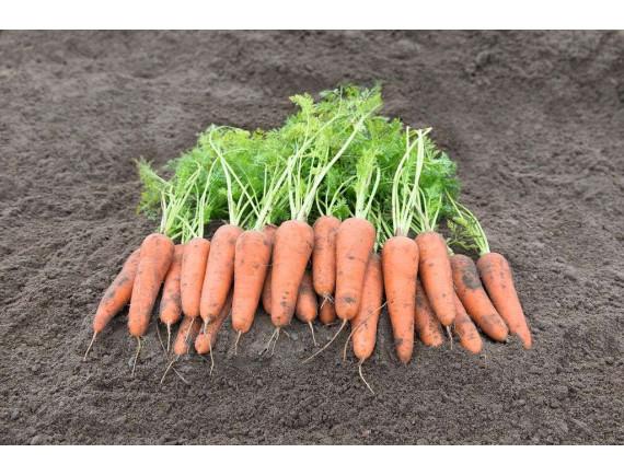 Морковь Базель F1 (0.3 гр)