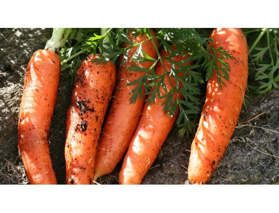 Морковь Канада F1 (0.3 гр)
