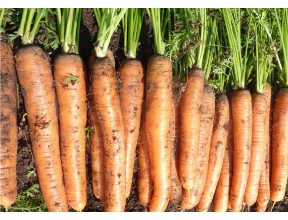 Морковь Навал F1 (0.3 гр)