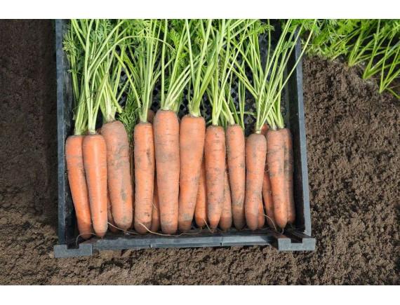 Морковь Нектар F1 (0.3 гр)