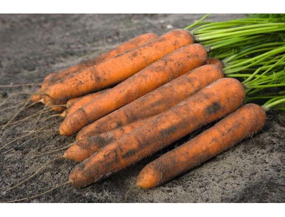 Морковь Нерак F1 (0.3 гр)