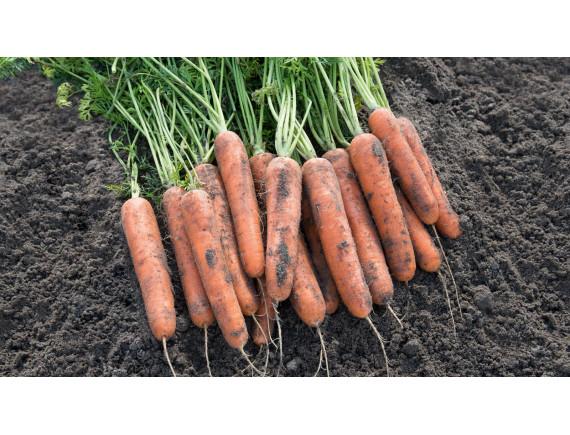 Морковь Ньюхолл F1 (0.3 гр)