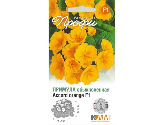 Примула (первоцвет обыкновенный) Accord orange F1, 10шт, Нидерланды