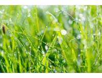 Удобрение Agrecol 100 дней для газона