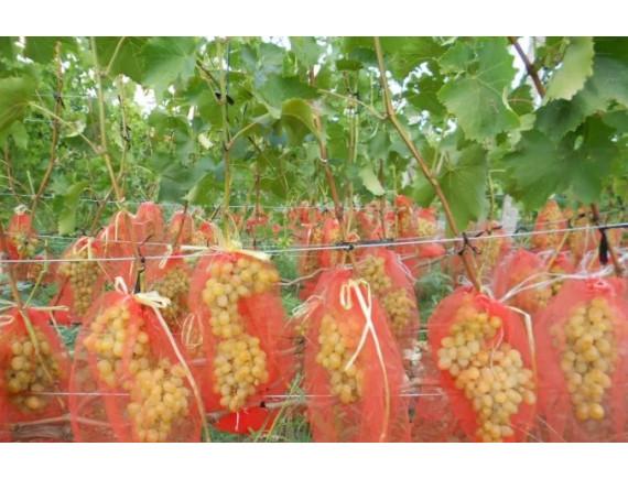 Сетка для защиты винограда, рукав диаметром 20см, длина 50см, РБ