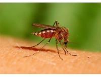 Жидкость от комаров и мошек Aquatain AMF